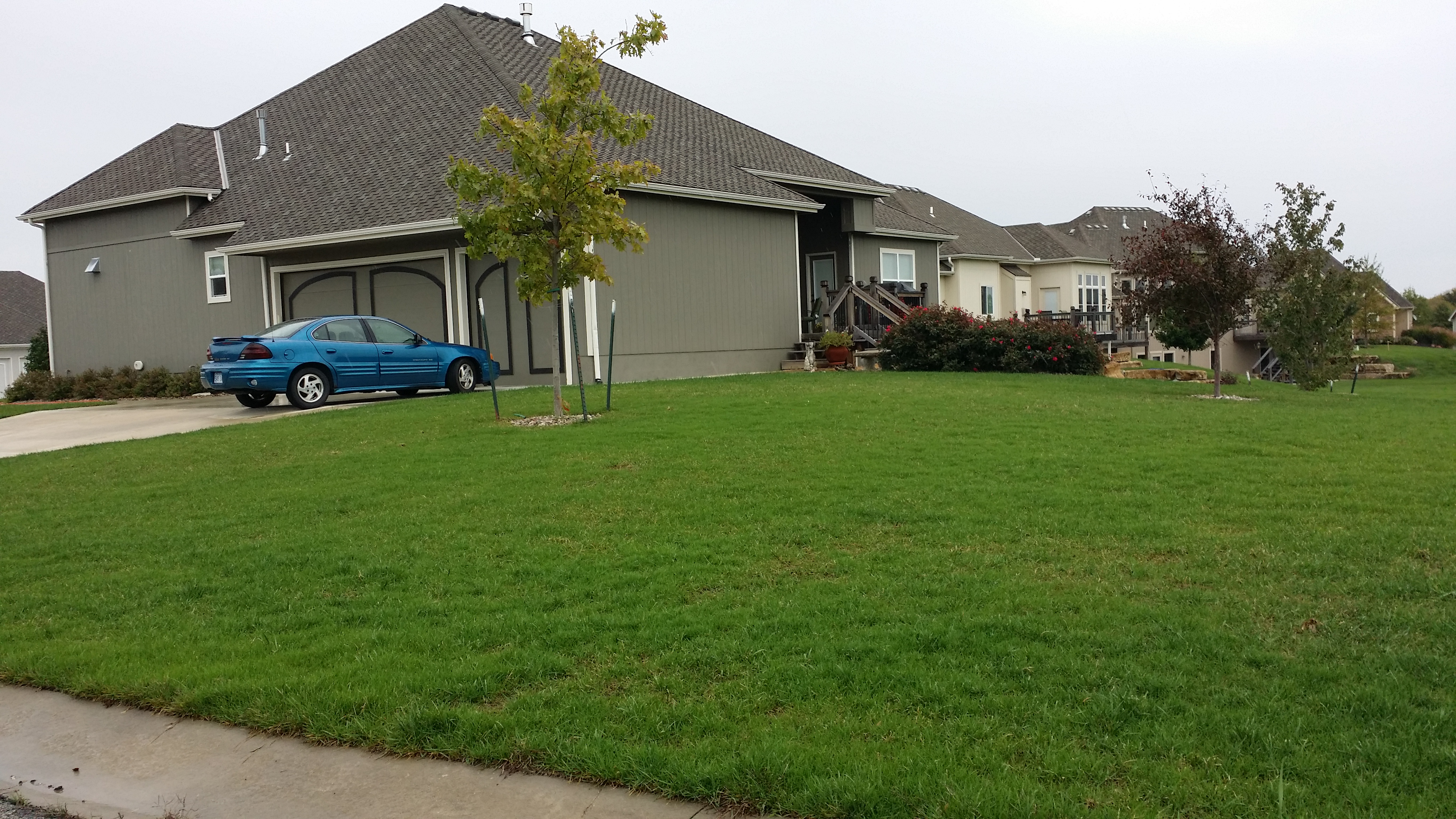 lawn renovations buddy rodgers and son professional lawn care